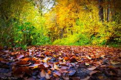 Autumn leaves in a forrest