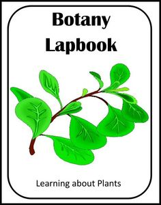 Botany Lapbook (Learning about Plants!) 3rd-6th