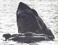 """horrorgorewhore: """"Shots from unused footage for Jaws from the second victim Alex. The scene shot here was much more gory and violent and was ultimately taken out for the less intense scene seen in the..."""