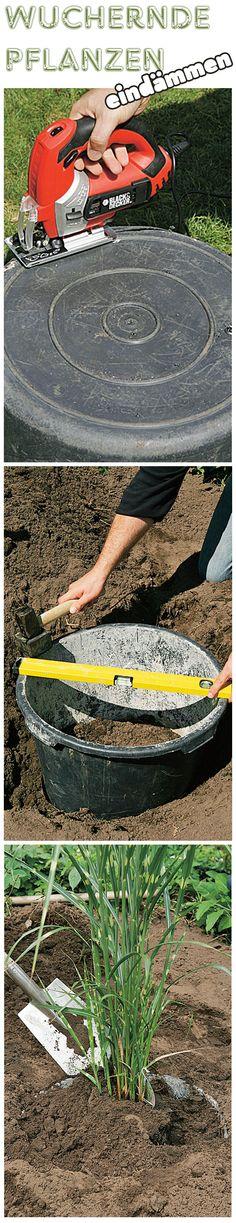 Keine Angst vor stark wuchernden Pflanzen – auch diese kann man in seinen Garten Pflanzen. Mit einer Rhizomsperre lassen sich dieser eindämmen – oder eben mit dem Pflanzkübel-Trick. Wir zeigen, wie es geht.