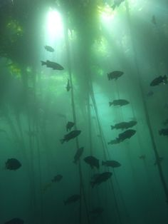 """I see the fish and kelp now, but when I first looked I thought """"An underwater shoe tree!"""""""
