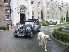Navy & SiLver Beauford Car Meath