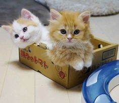 These kitties just love and adore their daddy, he absolutely means the world to them Beautiful Kittens, Cute Cats And Kittens, Kittens Cutest, Cute Baby Animals, Animals And Pets, Funny Animals, Kitten Love, I Love Cats, Orange Cats