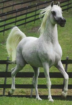 special breed s of horses   Special thanks to my lovely Rosalie 345 543 Ar! Rest in peace!