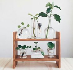 Insta feed obsession: I love this shot they reposted by Plant cuttings are just so dang cute, especially in simple little glass vessels ☺️ via