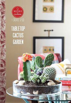 Tabletop Cactus Garden