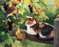 PERSIS CLAYTON WEIRS ~ cat sleeping in sun
