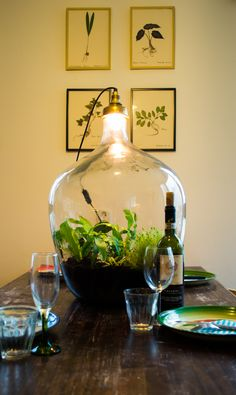 sustainable worlds by spruitje. Terrarium Diy, Bottle Terrarium, Indoor Garden, Indoor Plants, Mini Mundo, Little Gardens, Plant Lighting, Paludarium, Utrecht