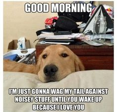 This is my dog EVERY morning around 6! I throw a pillow at her!