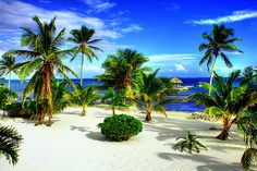 Belize... Ahhhh the beauty of white sand beaches, palm trees, warm breezes... when I dream, I dream in Belize, what about you?