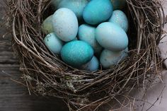 One of my favorite colors is robin's egg blue. I think the difficulty in recreating the color using dyes and food coloring makes it all that more attractive to me. Only Mother Nature can produce a blue that spectacular. So it only makes sense that the magnificent turquoise hue can be replicated