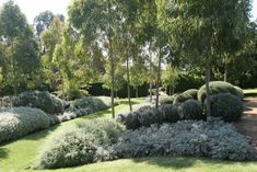 Make the most of our rich native flora and fauna with these Australian native garden design ideas brought to you by Australian Outdoor Living. Australian Garden Design, Australian Native Garden, Australian Plants, Acreage Landscaping, Front Yard Landscaping, Landscaping Ideas, Sloped Garden, Garden Beds, Bush Garden