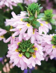 Green Flowers, Beneficial Insects, Perennials, Lilac, Diy And Crafts, Evergreen, Plants, Strudel, Stems