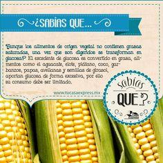 Debido a su alto contenido de glucosa, algunos alimentos vegetales son dañinos si se consumen en exceso. #Salud