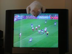 He loved to watch tv, especially football. Here he watches Turkey defeat Japan in the 2002 World Cup. 2002 World Cup, Green Eyes, Cool Cats, Turkey, Football, Japan, Watches, Tv, Soccer