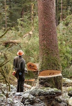Lumberjack Style, Lumberjack Party, Forest Pictures, Old Pictures, Logging Equipment, Heavy Equipment, Husky Chainsaw, Log Projects, In Another Life