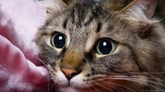 Cats are irresistibly sweet but sometimes their behavior irritates us completely. However, it turns out that their sometimes annoying behavior is one way of...