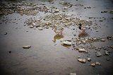 Free Kindle Book -  [Arts & Photography][Free] Walking around Japan - Kamo River - Kyoto (Photo Gallery)