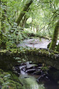 Kilfane Glen and Waterfall, Count Kilkenny, Ireland.