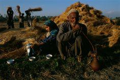 Life on a #Kashmir farm? :) | cc: @imsabbah | Photo by Steve Mc Curry