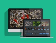 Beautiful Fish screensaver for Mac OSX with realistic effects and vivid sounds l #app