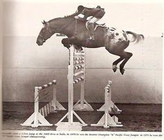 """ROSE RIDGE DYNAMITE """"Crocodile"""", a 1964 Foundation gelding is shown here being ridden by his owner Twinkie Nissen. He was so huge he had to have custom made tack; double long girths and reins. Close to 18 hands, he competed for many years in jump-offs, winning many, until he fractured his back in an accident. He was retired to pasture and lived out his life happy as a clam munching on grass fields."""