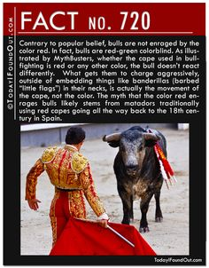 Contrary to popular belief, bulls are not enraged by the color red. In fact, bulls are red-green colorblind. As illustrated by MythBusters, whether the cape used in bullfighting is red or any other color, the bull doesn't react differently. What gets them to charge aggressively is actually the movement of the cape, not the color. The myth that the color red enrages bulls likely stems from matadors traditionally using red capes going all the way back to the 18th century in Spain.