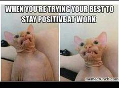 Memes Humor, Kpop Memes, Frases Humor, Funny Memes, Funny Work Meme, Cat Memes, Funny Shit, The Funny, Daily Funny