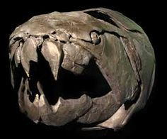 Image result for creatures with bony heads