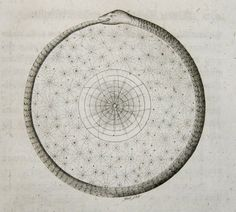 Things that Quicken the Heart: Circles - Mandalas - Radial Symmetry V / Sacred Geometry <3