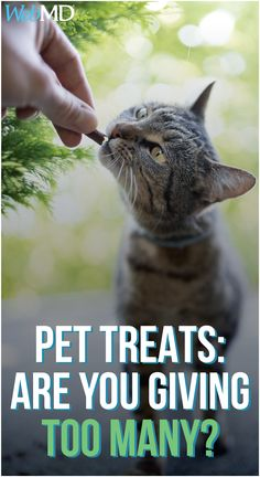 Many pet owners give treats as rewards -- or to show their love for their dogs or cats -- without thinking about the number of calories that are in each handout. These tips can help you avoid adding too many calories to your furry friend's diet. Cute Baby Animals, Funny Animals, Wild Animals, Funny Cat Photos, Funny Cats, Love Your Pet, Your Dog, Tiger Cubs, Tiger Tiger