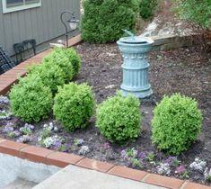 True Dwarf English Boxwood Buxus Live Plant Trade | Etsy Dwarf English Boxwood, Dwarf Boxwood, Dwarf Shrubs, Shrubs For Landscaping, Garden Shrubs, Landscaping Ideas, Garden Paths, Modern Landscaping, Garden Bed