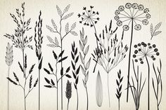 not free Botanical elements. More than 68! by GrafikBoutique on Creative Market
