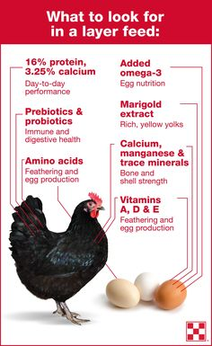 To produce a quality farm fresh egg each day, hens need 38 specific nutrients. Each nutrient plays an important role in hen health and egg production. Learn more about the essential chicken feed nutrients for laying hens by clicking the graphic. Best Egg Laying Chickens, Keeping Chickens, Raising Chickens, Baby Chickens, Chicken Eating, Chicken Feed, Chicken Eggs, Eating Clean