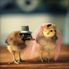 As it's nearly Easter we thought we'd celebrate the #style of these chicks. How cute! #wedding #fashion