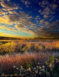 Autumn Splendor by Phil~Koch on Flickr