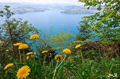 Bürgenstock Snowy Mountains, My Heritage, Zurich, Old Town, Night Club, Switzerland, Travel Guide, Medieval, Scene