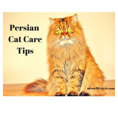 Helpful tips when caring for Persian cats.   http://meowlifestyle.com/persian-cat-care-tips/