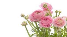 Kuvahaun tulos haulle vaaleanpunainen kukkakimppu