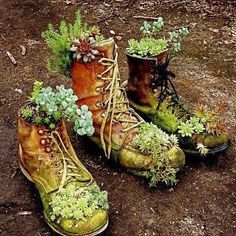 old boots full of succulents - I have marigolds growing in a pair of my hubby's old work boots.