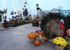 Fall decorations at The Island in Pigeon Forge, TN!