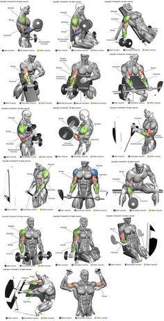 Braços (bíceps)