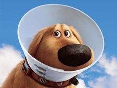 """I got: """"You are a Disney dog expert!"""" (7 out of 8! ) - How Well Do You Know Your Disney Dogs?"""