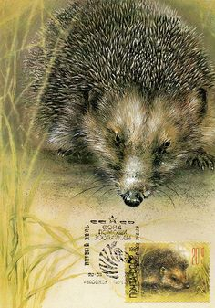 Hedgehog Artist A. Isakov First Day of Issue by SanctaSimplicitas