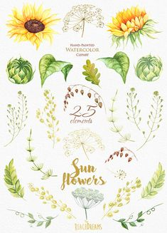 Sunflower Watercolor Flower clipart Separate by ReachDreams
