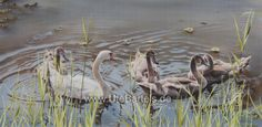 """Schwanenfamilie"" (Swansfamily) 110 x 70 cm Silkpainting www. Wildlife Art, Painting, Animals, Silk Painting, Nature, Animales, Kunst, Animaux, Painting Art"