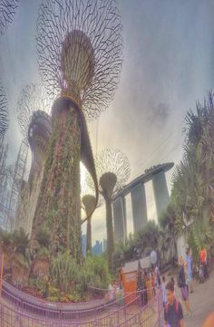 Gardens By The Bay is in Singapore, Singapore. Gardens by the Bay right behind the Marina Bay Sands -the famous hotel with an infinity pool on the top. Just Go, To Go, Gardens By The Bay, Ecommerce Hosting, Singapore, Infinity Pools, Fair Grounds, Explore, Modern