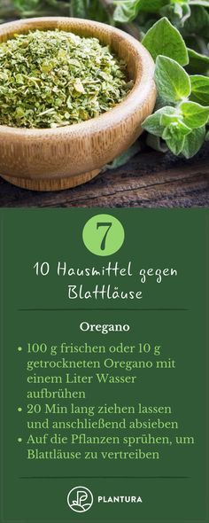 10 Hausmittel gegen Blattläuse 10 home remedies for aphids – Oregano: Who wants to fight aphids, should try it once with oregano. The spice not only tastes good, but can also be used as a home remedy for aphids. Backyard Decor, Garden Organization, Indoor Garden, Balcony Plants, Cottage Garden, Urban Garden, Apartment Garden, Gardening Tips, Small Gardens