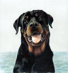 Rottweiler Framed Giclee by MargiH on Etsy, $98.00