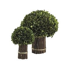 Preserved Boxwood in Twigs - Twig Topiary - Willow Twig Topiary - Ballard Designs